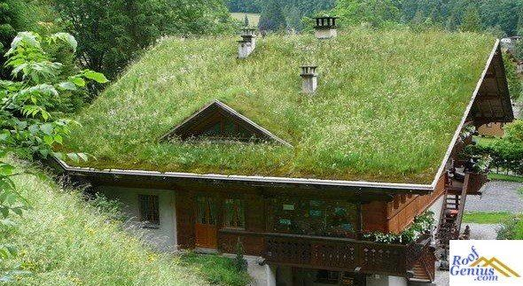 Maintenance Green Roof