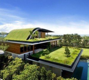 Setup Green Roofs for saving