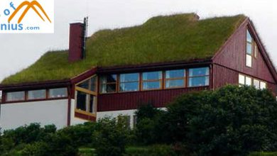 Photo of Benefits of Green Roofs